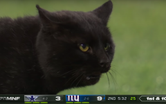 Run of the…Cat?