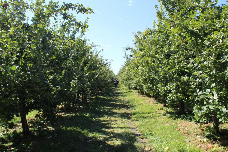 What Makes Solebury Orchards So Popular?